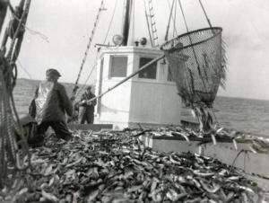 Gloucester's legendary fishing industry: Soon to be a thing of the past?