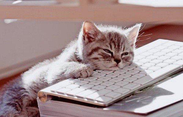 2016-12-27_0229-bored-cat
